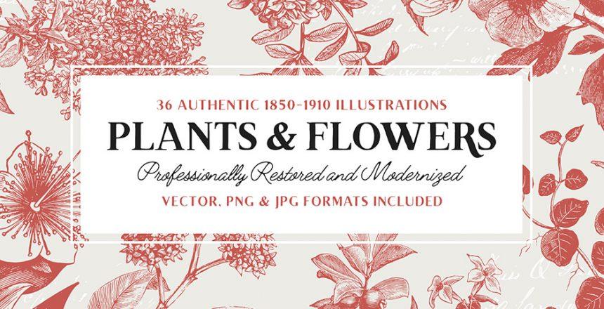 Pflanzen und Blumen Vektor Illustrationen als Download